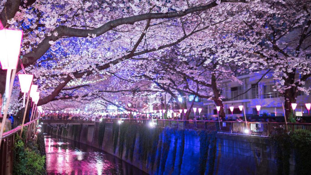 目黒川の桜並木ついでに寄生虫博物館デート
